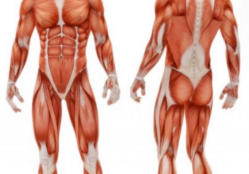 Kontrola mišic